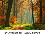 footpath through foggy forest... | Shutterstock . vector #600255995