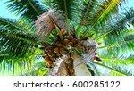 palm tree  miami florida | Shutterstock . vector #600285122