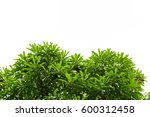green leaves isolated on white... | Shutterstock . vector #600312458