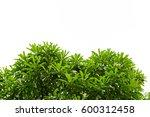 green leaves isolated on white... | Shutterstock . vector #600312458