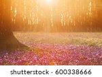Field Of Wild Purple Crocuses...