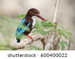 white breasted kingfisher in... | Shutterstock . vector #600400022