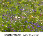 Wildflower Meadow In The South...