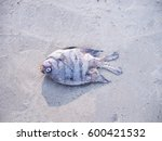 Small photo of Dead fish died aground on a beach