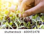 hand women pulling seedlings of ... | Shutterstock . vector #600451478