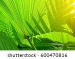 Stripes Of Tropical Palm Leave...
