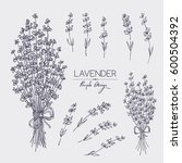 collection of lavender. hand... | Shutterstock .eps vector #600504392