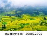 canola field  rapeseed flower... | Shutterstock . vector #600512702