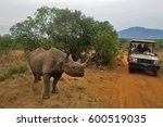 up close encounter with a black ...   Shutterstock . vector #600519035