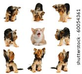 Stock photo cat surrounded by dogs 60054361
