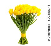bunch yellow tulips isolated on ... | Shutterstock . vector #600550145
