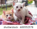 Stock photo two abandoned kittens with sad eyes and face in the cage cats waiting for home 600552578