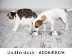 pet eating foot. cat and dog... | Shutterstock . vector #600630026