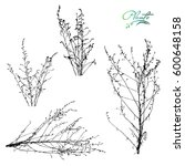set of branches and dry... | Shutterstock .eps vector #600648158