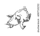 vector sketch of pig | Shutterstock .eps vector #600710252