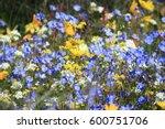 Blue Wild Flowers In...