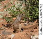 wildlife from zion national... | Shutterstock . vector #600799742