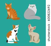 cat breed cute pet portrait... | Shutterstock .eps vector #600822692