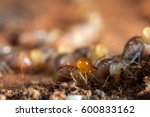 termites insects in colony over ... | Shutterstock . vector #600833162