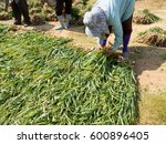 farmers are helping each other. ...   Shutterstock . vector #600896405