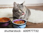 cute cat eating on floor at home | Shutterstock . vector #600977732