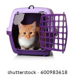 Stock photo foxy cat inside plastic carrier box on white background 600983618