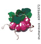 radishes handmade graphics ... | Shutterstock .eps vector #600995372