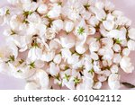 white gentle flowers background ... | Shutterstock . vector #601042112