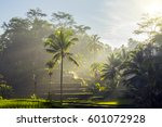 sunrise view over rice terrace... | Shutterstock . vector #601072928