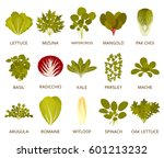 green salad plants isolated on... | Shutterstock .eps vector #601213232