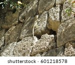 a lizard on a stone wall with... | Shutterstock . vector #601218578