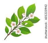cherry blossom. vector... | Shutterstock .eps vector #601223942