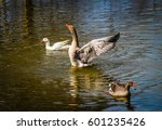 geese in the water | Shutterstock . vector #601235426