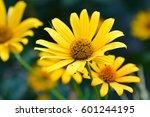 yellow gerbera flower | Shutterstock . vector #601244195