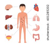 human body anatomy. medical... | Shutterstock .eps vector #601285202