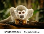 look at squirrel monkey in... | Shutterstock . vector #601308812