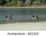 Birds on water - stock photo