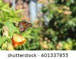 butterfly   Shutterstock . vector #601337855