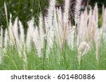 Group Of White Grass  Long Lea...