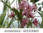 flower    Shutterstock . vector #601516865