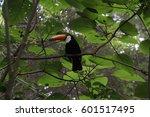 santa cruz   Shutterstock . vector #601517495