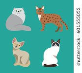 cat breed cute pet portrait... | Shutterstock .eps vector #601555052