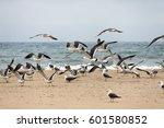 seagulls on the shoreline. | Shutterstock . vector #601580852