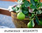 Closeup Lime Fruit On Tree...