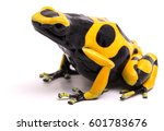 yellow black bumblebee poison...   Shutterstock . vector #601783676