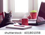 Stock photo pensive cat sitting at the table with laptop and red cup tired of working make the coffee break 601801058