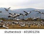 a huge flock of migratory birds ... | Shutterstock . vector #601801256