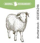 sketch of sheep drawn by hand.... | Shutterstock .eps vector #601856246