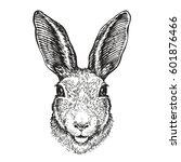Hand Drawn Portrait Of Rabbit....