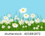 chamomile filed flourishing in... | Shutterstock .eps vector #601881872